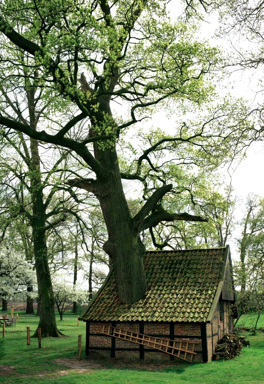 Bakspieker-met-boom-Jonkershoesweg-4-Breklenkamp