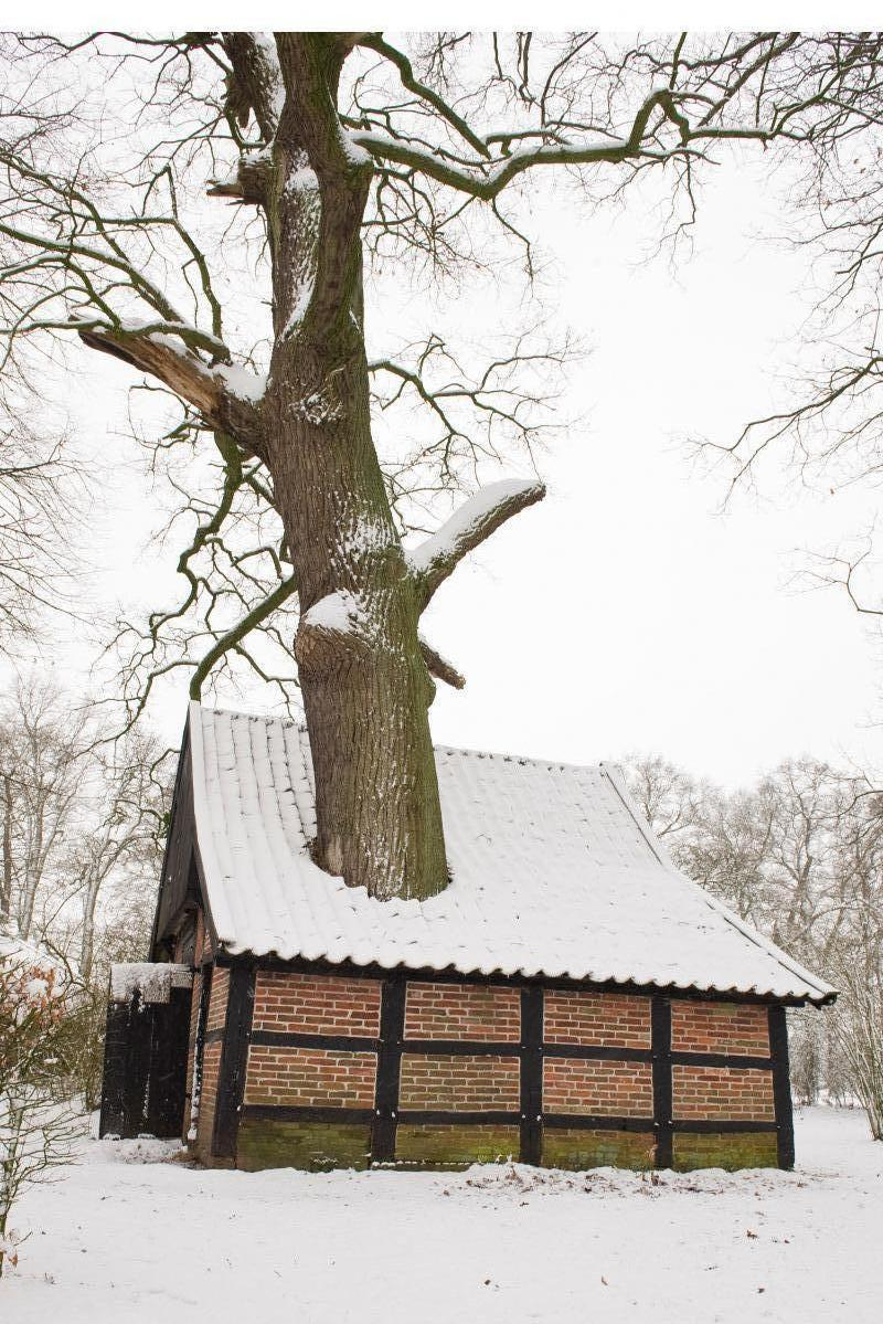 De bakpieker in de winter - foto Rob Warmes